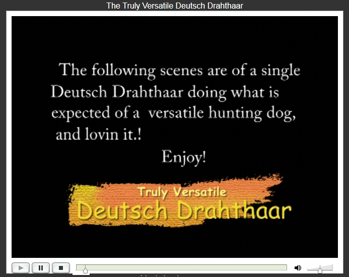 Truly Versatile Deutsch Drahthaar Video